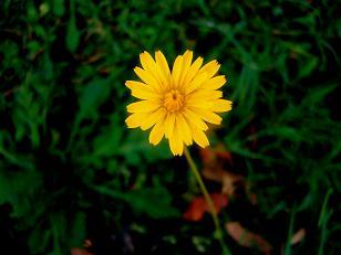 20070103005223-margarita-petalo-a-petalo.jpg