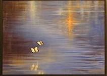 20070905004603-magicos-momentos..jpg