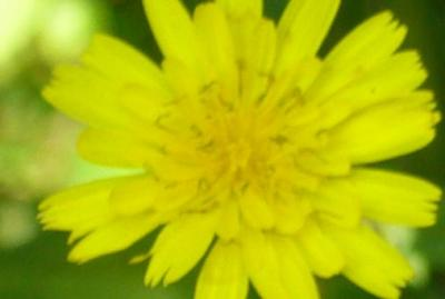 20081019121643-flor.jpg