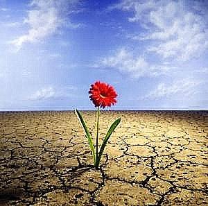 20120324082801-flor-en-desierto.jpg
