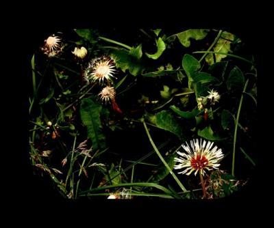 20120902133406-flores.jpg