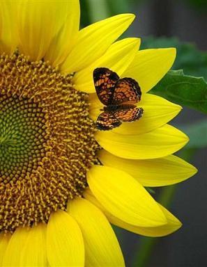 20071208235329-el-beso-de-una-mariposa..jpg