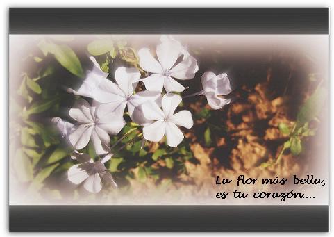 20080320174240-flores..jpg