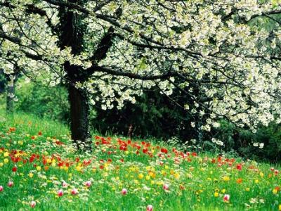 20110320102435-primavera-esperanza.lamula.pe.jpg