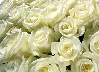 20130726081834-flores-blancas.jpg